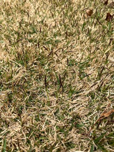 2019年4月 芝の穂刈りをしました