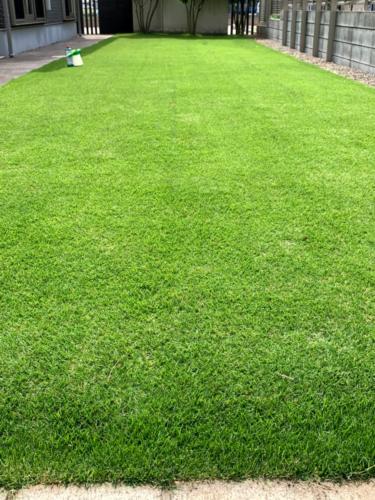 2019年6月後半 芝生状況