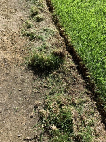 芝生エッジ処理とスプリンクラー撤収 2020年9月下旬