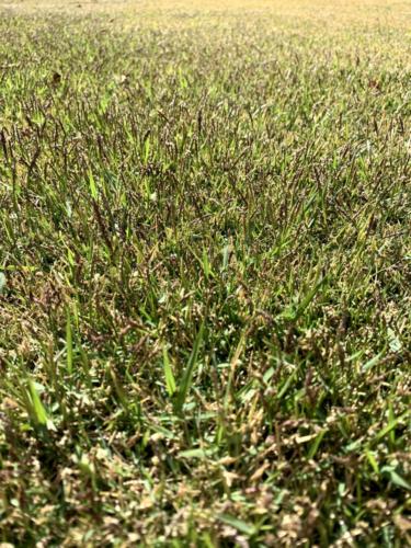 2021年4月中旬 今シーズン芝刈り開始
