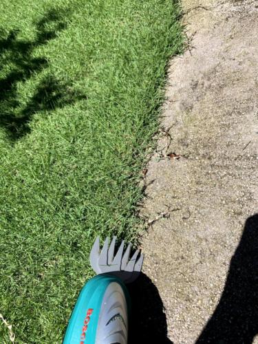 2020年8月上旬 梅雨明けの芝生状況