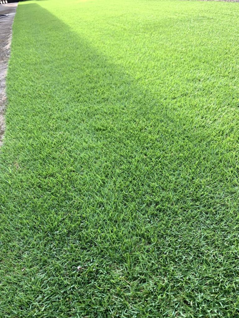 芝生 スミチオン